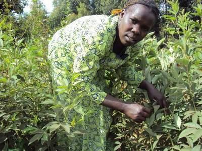 Gakii Mwenda, Kiva lender from Kenya