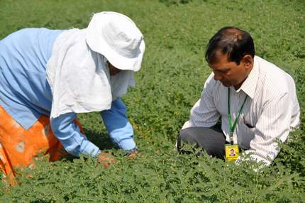 ICRISAT researcher in test field