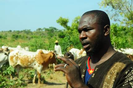 Cattle keeper in Ghana