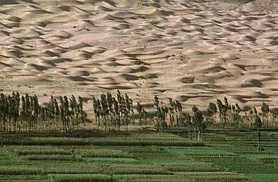 Forest belt in China trying to stop desertification