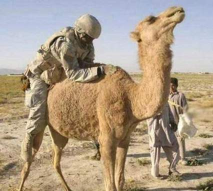 soldier does camel