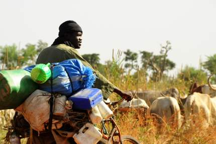 Mali nomad with his cattle
