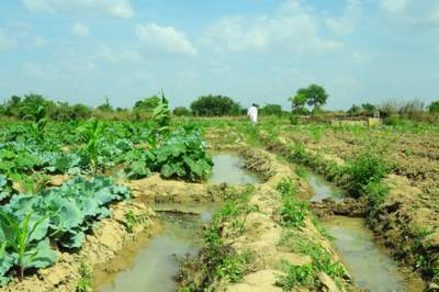 Vegetable farm in Ghana